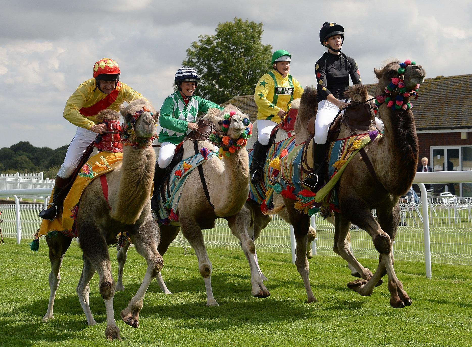 Beverley Racecourse fixtures